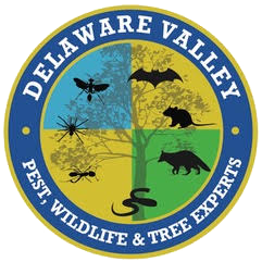Del-Valley-Pest-and-Wildlife-Experts.png